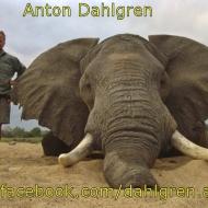 http://www.facebook.com/dahlgren.anton