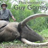 https://www.facebook.com/guy.gorney